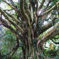 rainforest2010 432.JPG