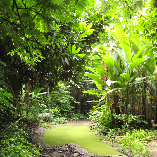 rainforest2010 811.JPG