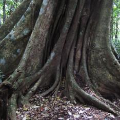 rainforest2010 387.JPG