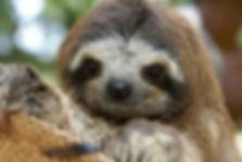 slothpic.jpg