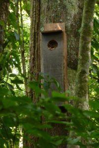 Nesting-box-200x300.jpg