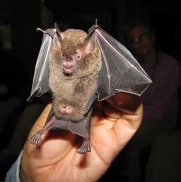 Bat Netting at night.jpg