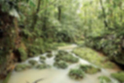 stream-Amazon-Rainforest-Ecuador.jpg
