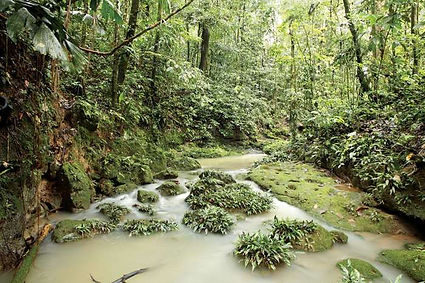 stream-Amazon-Rainforest-Ecuador.jpg