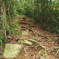 rainforest2010 381.JPG