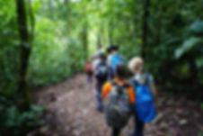 Zamia trail-.JPG