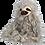 Thumbnail: Sal the Sloth