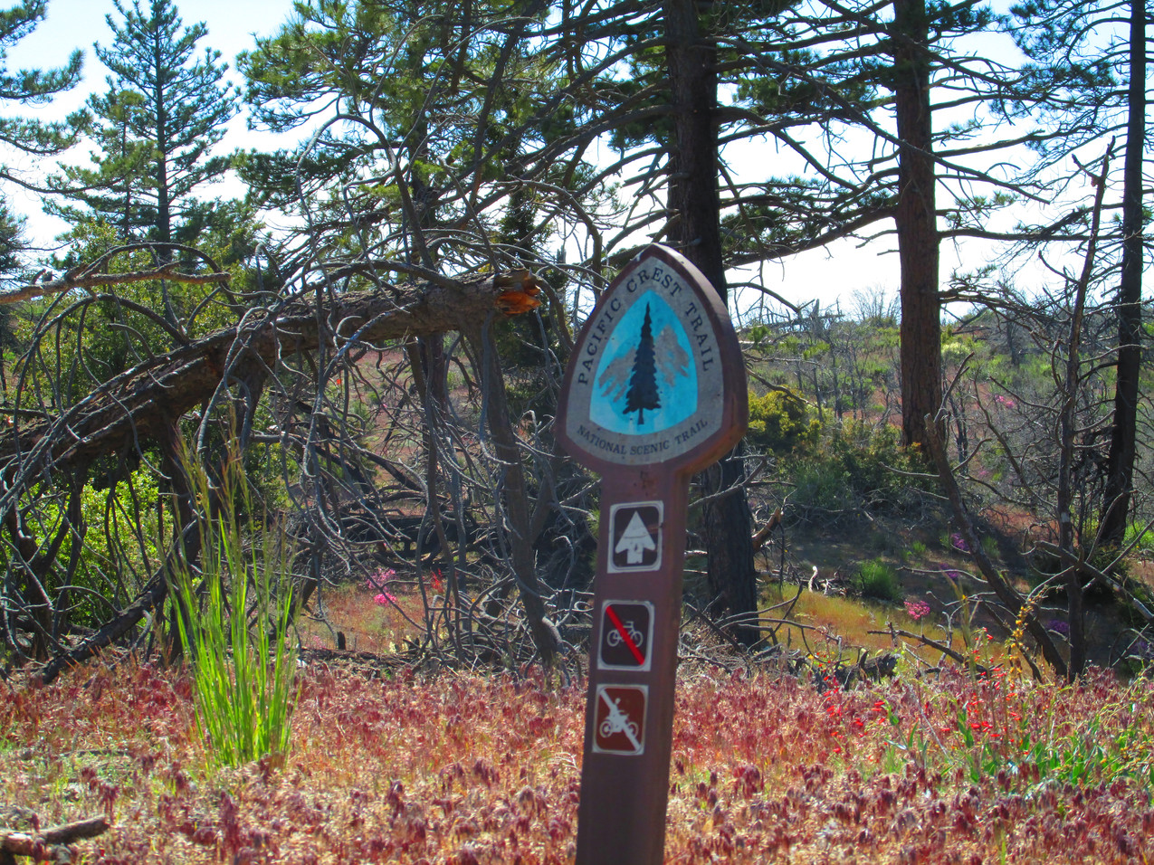 Another of the many different PCT trail markers.