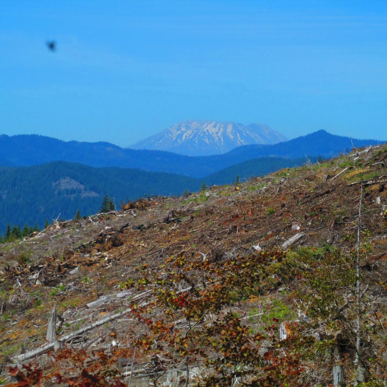 This mountain is the reason I grew up in Washington.