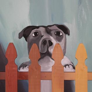 Dog 4.JPG