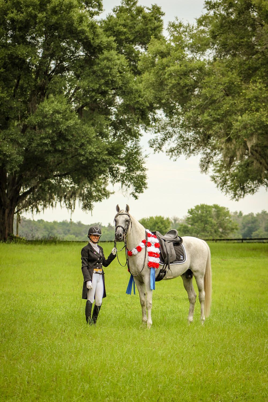Champion Arabian Dressage Stallion