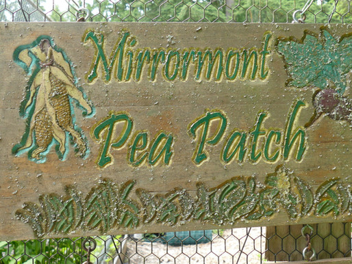 Mirrormont Pea Patch: Our organic community garden