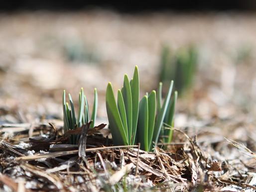 When to Start Your Spring Garden