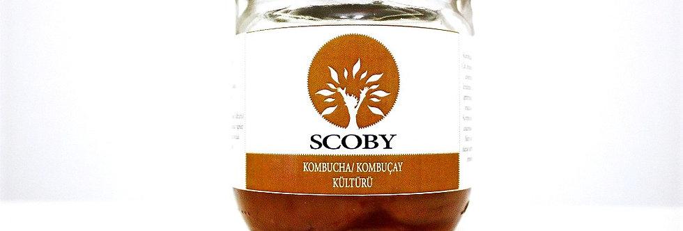 Kombucha Kültürü (SCOBY)