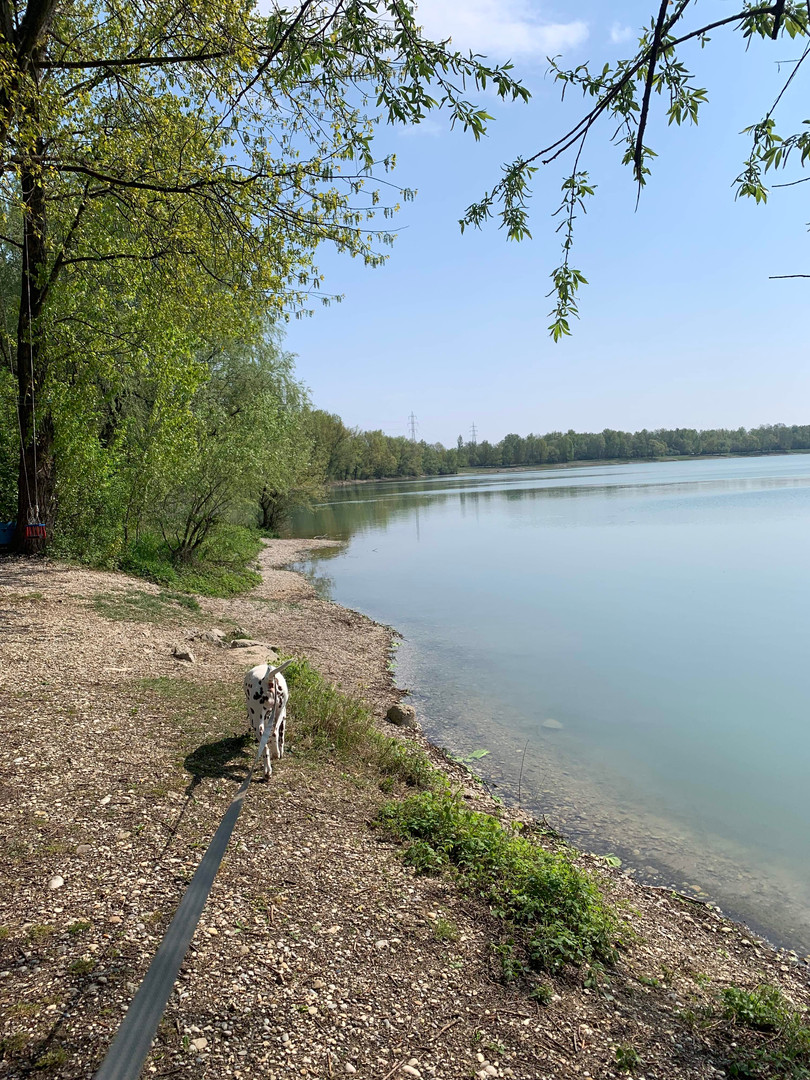Petite ballade autour d'un lac.jpg