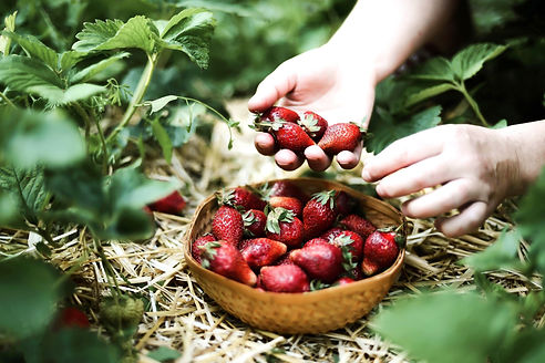 Picking%2520Strawberries_edited_edited.j
