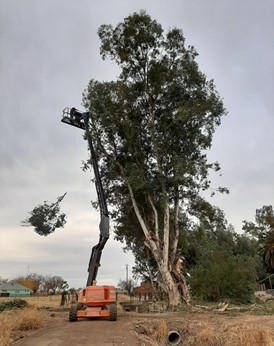 Tree pruning on lateral 19-1J