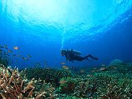 Diver int he Reef