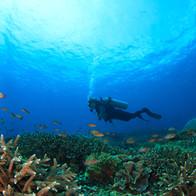 Diver in he Reef