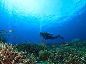 קונסטלציה היא כמו ים - שיר לכבוד יום האוקיינוסים הבינלאומי 8 ביוני