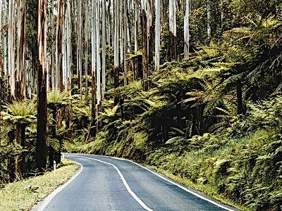 Rainforest Road-800x600.jpg