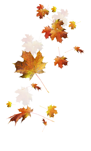177-1777613_transparent-fall-leaves-fall