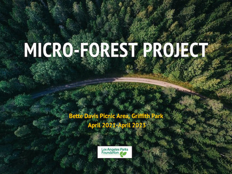 Design plans for the Micro-Forest Project at Bette Davis
