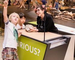 Curiosity Cart NHM