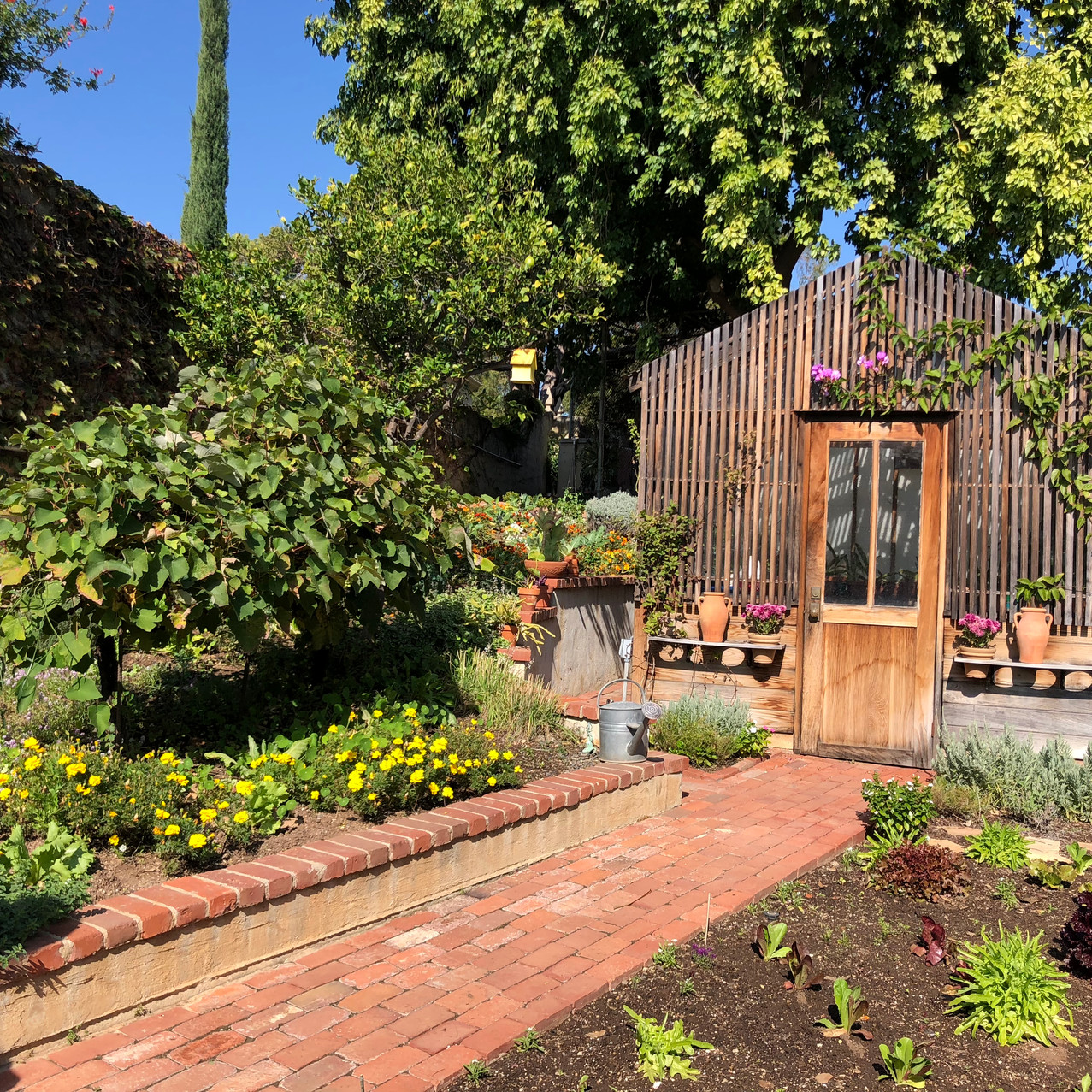 Robinson Gardens Oct 2018 - 11