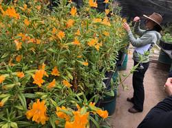 Grown in LA Native Plant Nursery