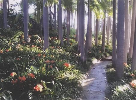 October: Virginia Robinson Gardens