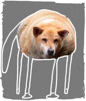 Hund in Grau
