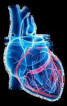 Δημήτριος Ηλιόπουλος Καρδιοχειρουργός, kardioxeirourgos, Στεφανιαία Νόσος, Βαλβιδοπάθειες, καρδιοχερουργικές επεμβάσεις, Bypass, by-pass, επεμβάσεις καρδιάς, επεμβάσεις βαλβίδων, Συγγενείς Καρδιοπάθειες, Ανευρύσματα, αρτηριακά μοσχεύματα, βαλβίδες καρδιάς, βαλβιδοπλαστική, Στένωση Αορτικής, Ανεπάρκεια Αορτικής, Στένωση Μιτροειδούς, Ανεπάρκεια Μιτροειδούς, Ανεπάρκεια Τριγλώχινας, Στένωση Τριγλώχινας, Στεφανιαίες Παρακάμψεις, Αγγειοπλαστική, μπαλονάκι, Βαλβιδοπλαστικές Μιτροειδούς