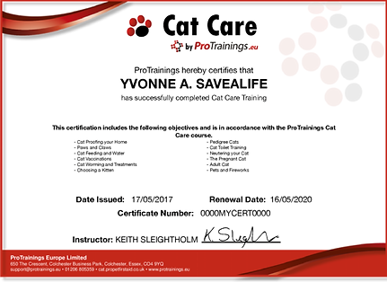 Cat Care Certficate