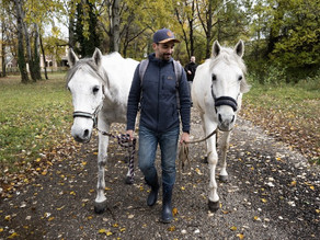 What leaders can learn from horses?