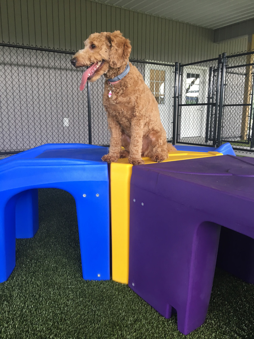 Gracie May enjoying our K9 Playground