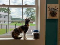 Thea enjoying the Windowsill