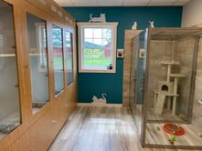 Cat Boarding Room