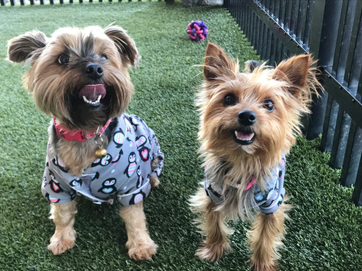 Lilly and Abby in Matching PJs!