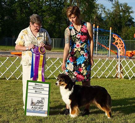 Ellie Best of Breed under Judge Denise R