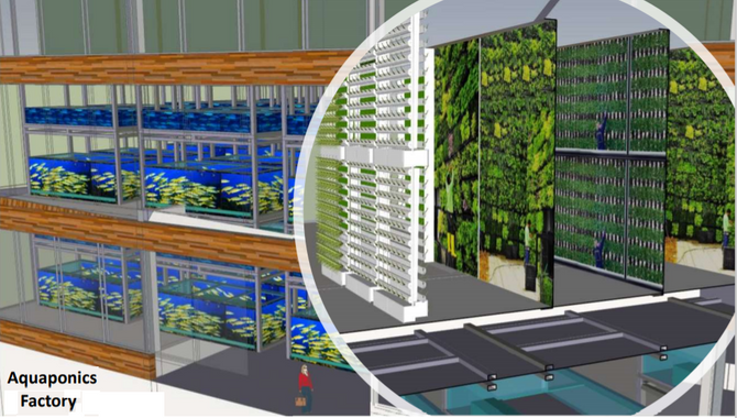 Now You Can Grow leafy vegie together with your fish!