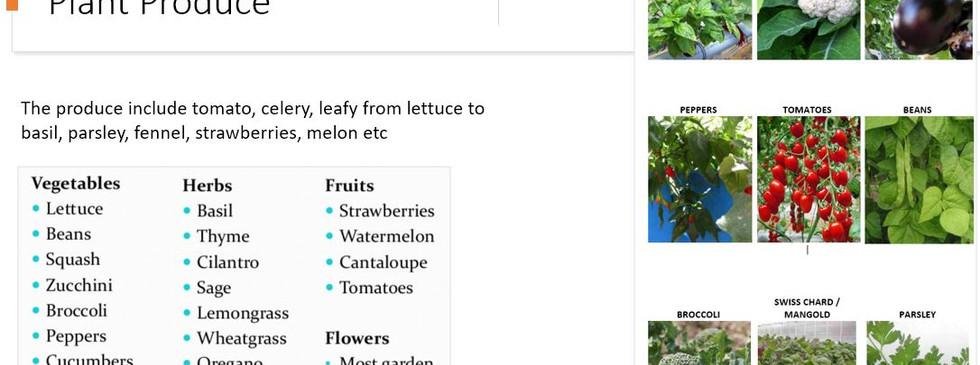 Plant produce.jpg