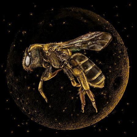 Golden Moon Bee