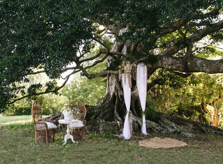 Spring is in the Air.... as are Weddings and Elopements