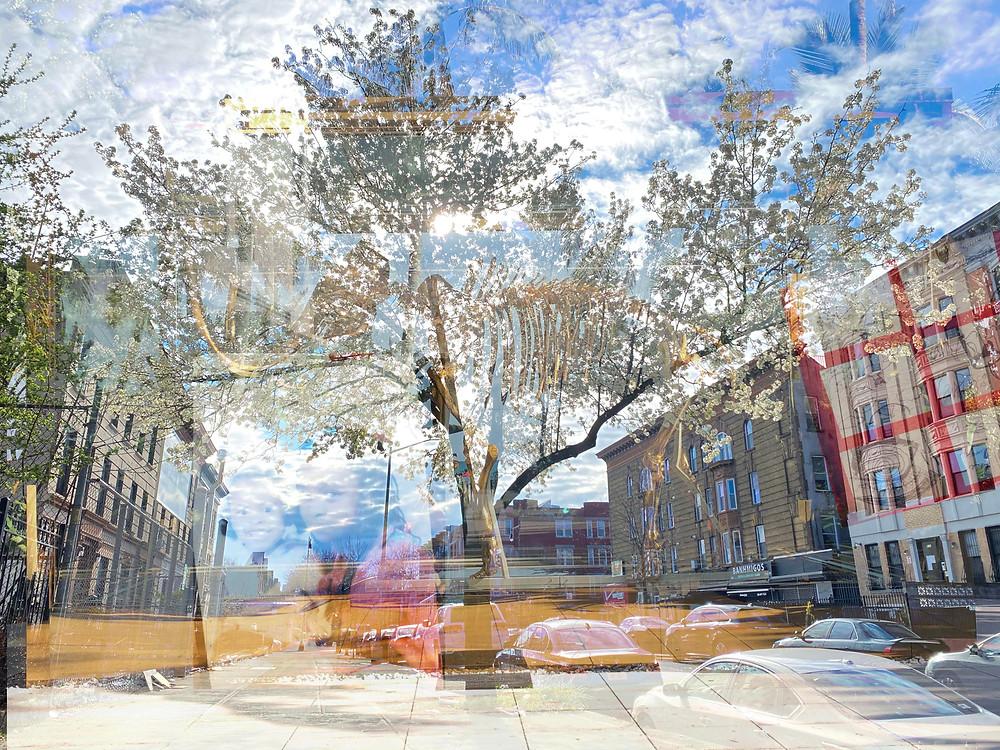 Multi-photo layered photo using digital, print and art to create greater work.