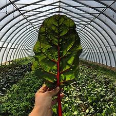Sideroad Kale.jpg