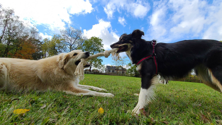 Jake and Willow Playing