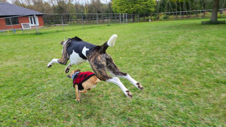 Run Run Run Jump Jump Jump