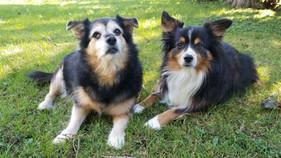 Hector & Cornelius