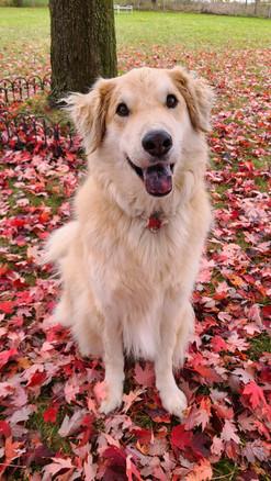 Handsome Jake